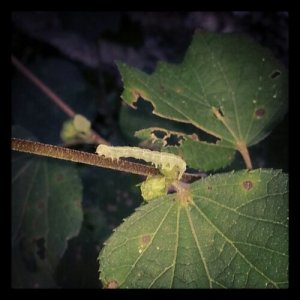 A super cool caterpillar!