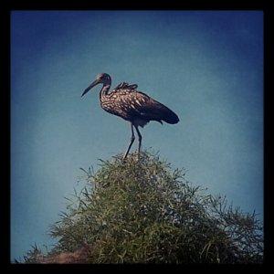 A curious bird.